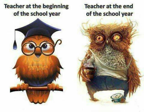 teachowl